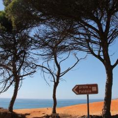 falesia beach vakantie algarve portugal IMG_8033