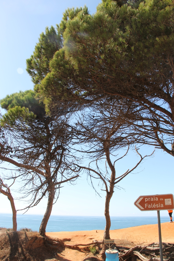 falesia beach vakantie algarve portugal IMG_8034