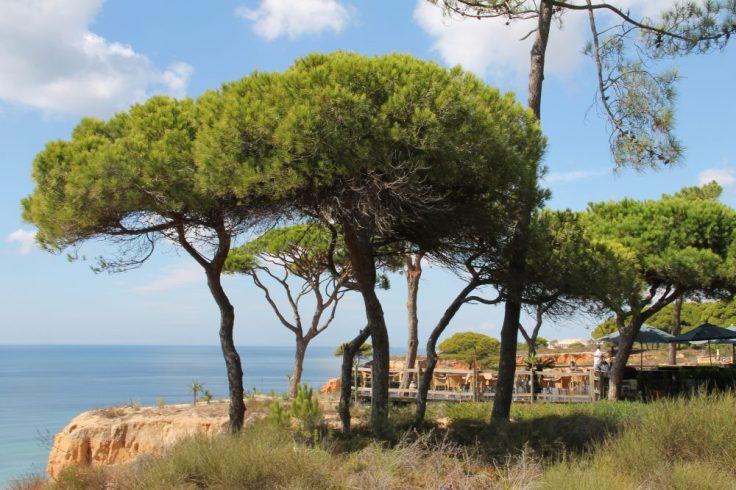 falesia beach vakantie algarve portugal IMG_8116
