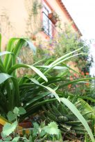 monchique algarve - vakantie algarve IMG_8458