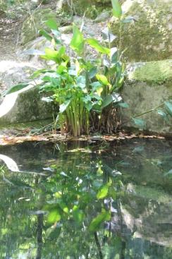 monchique algarve - vakantie algarve IMG_8530