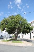 Tavira - algarve vakantie portugal IMG_7876