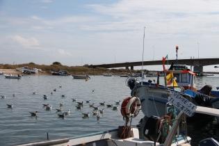 Tavira - algarve vakantie portugal IMG_7918