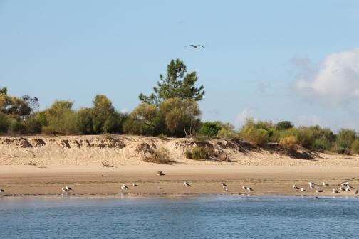 Tavira - algarve vakantie portugal IMG_7990