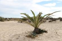 Tavira - algarve vakantie portugal IMG_8014