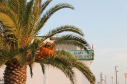 vakantie algarve portugal -Faro airport vliegveld IMG_8972