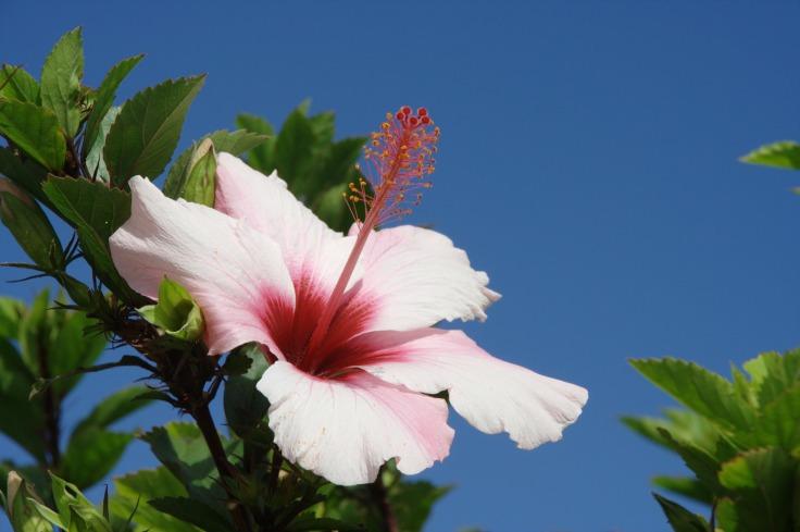 bloemen op madeira portugal